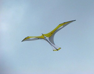 Laima by Flying Wings