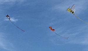 SkydogCritters